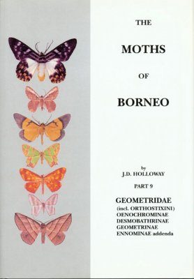 The Moths of Borneo, Part 9