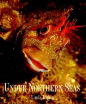 Under Northern Seas