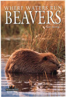 Beavers: Where Waters Run