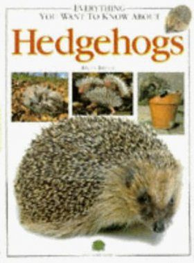 Everything You Want to Know About Hedgehogs