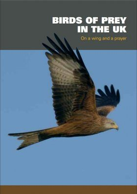 Birds of Prey in the UK: On a Wing and a Prayer