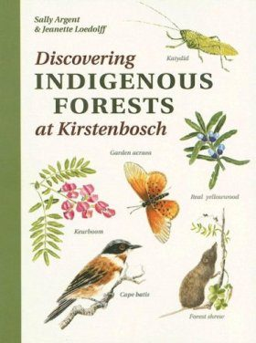 Discovering Indigenous Forests at Kirstenbosch