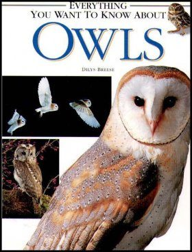 Everything You Want to Know About Owls