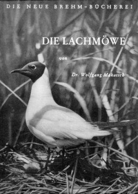 Die Lachmöwe (Black-headed Gull)