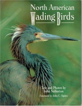 North American Wading Birds