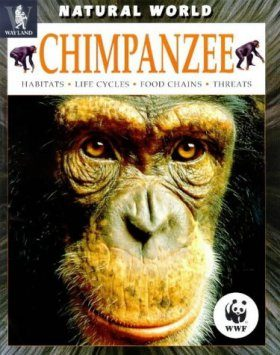 Chimpanzee: Habitats, Life Cycles, Food Chains, Threats