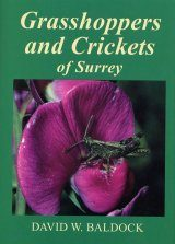 Grasshoppers and Crickets of Surrey