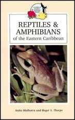 Reptiles and Amphibians of the Eastern Caribbean