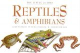 The Little Guides: Reptiles and Amphibians