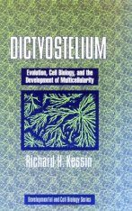 Dictyostelium: Evolution, Cell Biology and the Development of Multicellularity