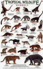 Tropical Wildlife Field Guide: Mammals [English / Spanish]