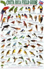 Costa Rica Field Guide: Birds of the Pacific Coast Tropical Rainforest: Osa Peninsula: Parque Nacional Corcovado, Drake Bay, Rio Sierpe, Isla del Cano, Golfo Dulce [English / Spanish]