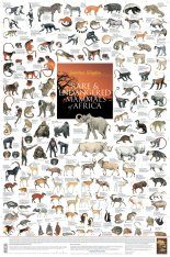 Rare and Endangered Mammals of Africa - Poster