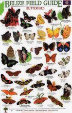 Belize Field Guides: Butterflies [English / Spanish]