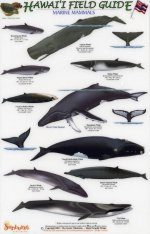 Hawaii Field Guides: Marine Mammals