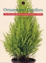 Identifying Ornamental Conifers