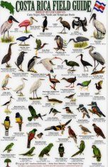 Costa Rica Field Guide: Birds of Wetland Habitats: Cano Negro, Palo Verde and Tempisque Basin [English / Spanish]