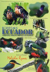 Birding Ecuador - Hummers, Howlers and Hissing Hoatzin (All Regions)