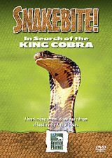 In Search of the King Cobra (Region 2)