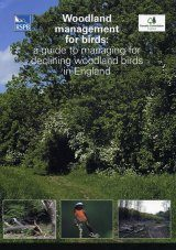 Woodland Management for Birds: A Guide to Managing for Declining Woodland Birds in England