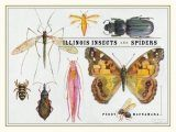 Illinois Insects and Spiders