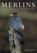Merlins of the South-East Yorkshire Dales