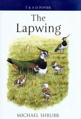 The Lapwing