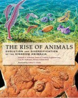 The Rise of Animals