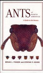 Ants of North America