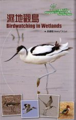 Birdwatching in Wetlands