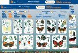 Guide to Common Butterflies