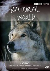 Natural World: Lobo - DVD (Region 2 & 4)