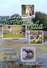 Birding Northern India, Part 2 (All Regions)