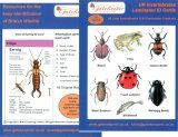 Pocket Pack: Identifying 80 Land and Freshwater Invertebrates and Creatures