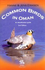 Common Birds in Oman