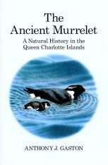 The Ancient Murrelet