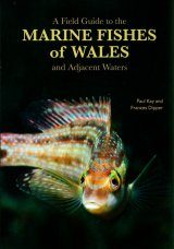 A Field Guide to the Marine Fishes of Wales and Adjacent Waters