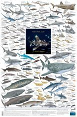 Sharks of the World, 3: Oceanic Depths - Poster