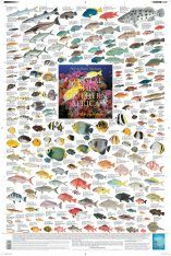 Coastal Fishes of Southern Africa, 3: Coral and Rocky Reefs - Poster