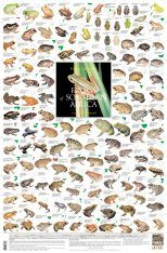 Frogs of Southern Africa - Poster