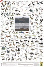 Inland Waterbirds, Southern Africa - Poster