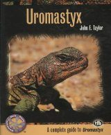 Uromastyx: A Complete Guide to Uromastyx