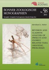 Revision and Cladistic Analysis of Pholcus and Closely Related Taxa (Araneae, Pholcidae)