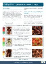 Field Guide to Sphagnum Mosses in Bogs