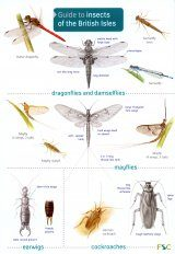 Guide to Insects of the British Isles