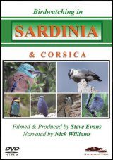 Birdwatching in Sardinia & Corsica (All Regions)