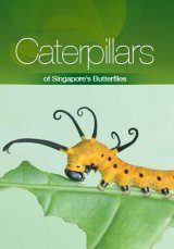 Caterpillars of Singapore's Butterflies