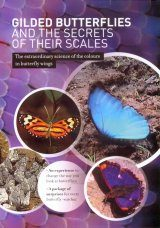 Gilded Butterflies and the Secrets of their Scales (All Regions)