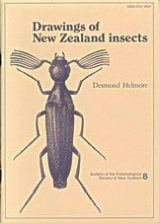 Drawings of New Zealand Insects