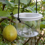 Insect Bait Trap with Wire Screen